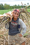 Sugar cane worker Stock Image