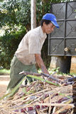 Sugar cane worker Stock Images