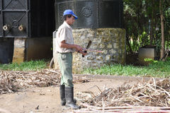 Sugar cane worker Stock Photos