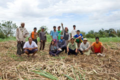Sugar cane workers Stock Images