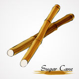 Sugar canes. Hand drawn vector ripe sugar canes on the light background Stock Illustration