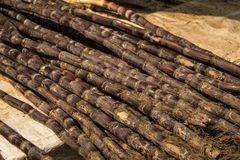Sugar canes ready to be transformed in juice in colorful indian royalty free stock photos