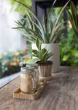 Sugar in glass jar with small tree in the pot plant decorated Royalty Free Stock Images