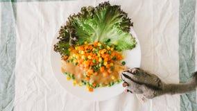 Sugar Glider eats fish steak. Royalty Free Stock Photos