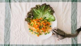 Sugar Glider eats fish steak. Royalty Free Stock Image