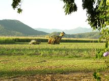 Sugar Industry Sugarcane Harvest Scene en Ingham Queensland Australia Foto de archivo
