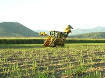 Sugar Industry Sugarcane Harvest Scene in Ingham Queensland Australia Stock Photo