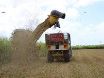 Sugar Industry Sugarcane Harvest Scene i Ingham Queensland Australien Royaltyfria Foton