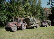 Sugar Industry Sugarcane Harvest Scene in Ingham Queensland Australië royalty-vrije stock fotografie