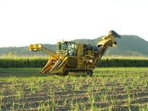 Sugar Industry Sugarcane Harvest Scene in Ingham Queensland Australien lizenzfreie stockbilder