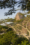 Sugar Loaf. View of Sugar Loaf from Pasmado the lookout for Botafogo Royalty Free Stock Photo