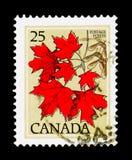 Sugar Maple Acer saccharum, Definitives 1977-79 serie (för sidor), Royaltyfria Bilder