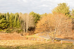Sugar maple tree, acer saccharum, evergreens and winding country roa. D, late Fall color, upstate rural New York stock photos