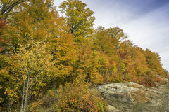 Sugar Maples Growing on Precambrian Shield in Autumn - Ontario,. Sugar Maples (Acer saccharum) Growing on Precambrian Shield in Autumn - Algonquin Provincial Royalty Free Stock Photography