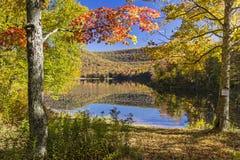 Sugar Maples på den färgrika Catskills sjön arkivfoton