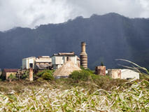 Sugar Mill Over Cane Fields Arkivfoto