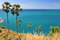 Sugar palm Blue sea. Royalty Free Stock Photography