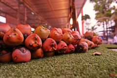 Sugar Palm fruit. Fruit of sugar palm tree,use as fresh fruit and preserved fruit in syrup stock images