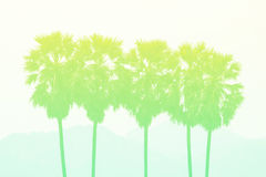 Sugar palm in pastel styles. Stock Photography