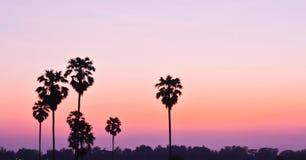 Sugar palm at sunset Royalty Free Stock Photos