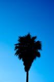 Sugar Palm Tree Shadow Imagens de Stock Royalty Free