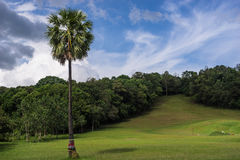 Sugar palm tree on the small hill Stock Images