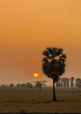 Sugar palm tree and sunset Royalty Free Stock Photography