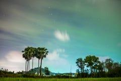 Sugar palm Stock Photography