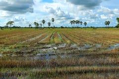 Sugar palm trees. Royalty Free Stock Photos