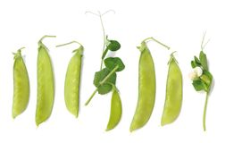 Sugar pea pods Royalty Free Stock Image