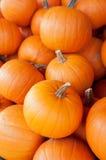Sugar Pie Pumpkins Fotografia Stock Libera da Diritti