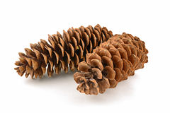Sugar pine cones. California High Sierra Sugar Pine Cones are the largest in the world, and are most abundant in the Sierra Nevada Mountains of central Stock Photos