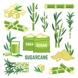 Sugar plant agricultural crops, cane leaf, sugarcane juice vector icons