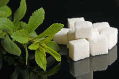Stevia rebaudiana sweetener. A Stevia rebaudiana plant and cubes of sweetener made with stevia Royalty Free Stock Photo