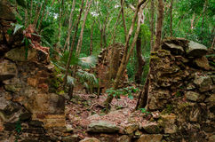 Sugar Plantation Ruins in Jungle. Ruins of an old sugar mill in a remote area of jungle stock photo