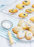 Sugar powdered homemade madeleines with blueberries. On the plate Stock Images