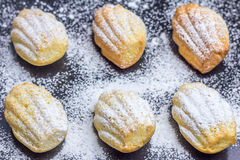 Sugar powdered madeleines. On baking tray Stock Photography