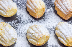 Sugar powdered madeleines on baking tray. Closeup Stock Photos