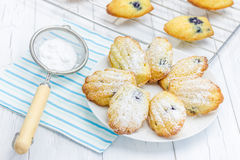 Sugar powdered madeleines with blueberries Royalty Free Stock Photo