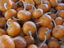 Sugar Pumpkins at a Farmers Market stock images