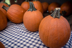 Sugar Pumpkins Royalty Free Stock Images