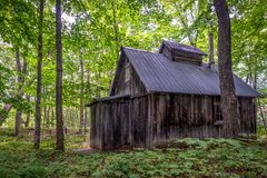 Sugar shack in a maple grove in summer, Quebec stock photo