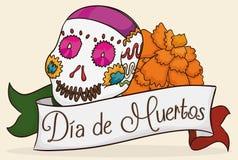 Sugar Skull con la flor de la maravilla que celebra a Dia de Muertos, ejemplo del vector Fotografía de archivo