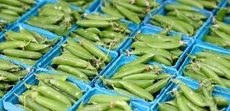 Sugar Snap Peas stock photos