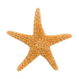 Sugar Starfish Stock Photography