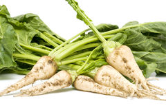 Sugarbeet Foto de Stock Royalty Free