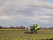 Sugarbeet harvester Stock Photos