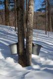 Sugarbush Maple Taps. Winter sugarbush maple sugar taps Stock Images