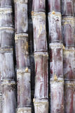 Sugarcane Royalty Free Stock Photos