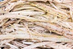 Sugarcane bagasse Stock Images